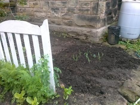 three sisters planting