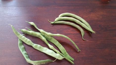 Kwintus beans